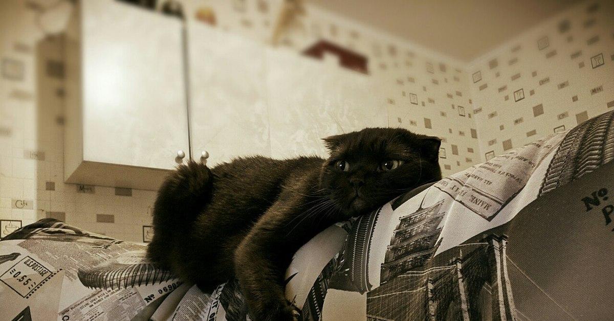 Кот спинка дивана