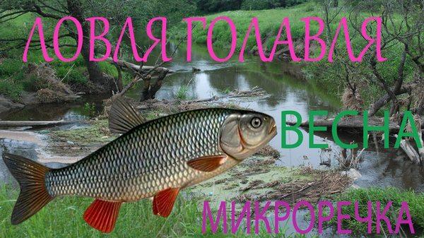 весенняя рыбалка на голавля видео